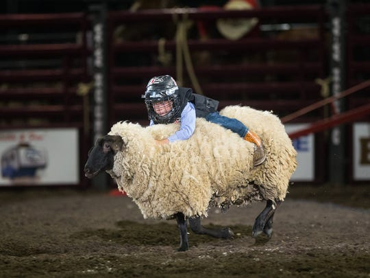 A young boy competes in mutton bustin' during the second night of Rodeo Corpus Christ at the American Bank Center, Friday, April 15, 2016.