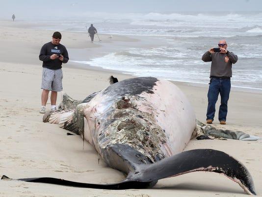Toms River dead whale