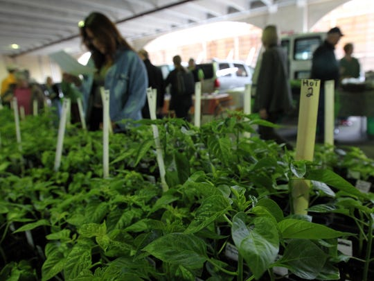 Pepper plants are pictured at the Iowa City Farmers Market at Chauncey Swan on Wednesday, May 3, 2017.