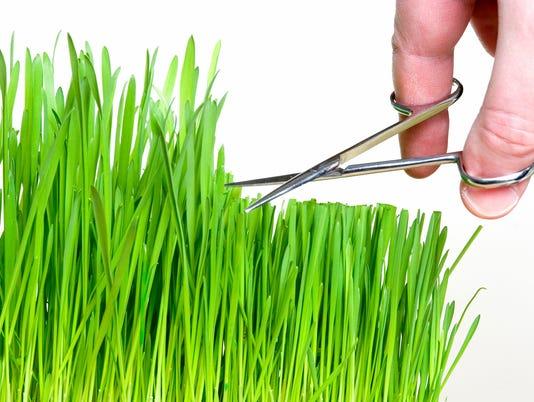 636330399541594903-Gardening.JPG