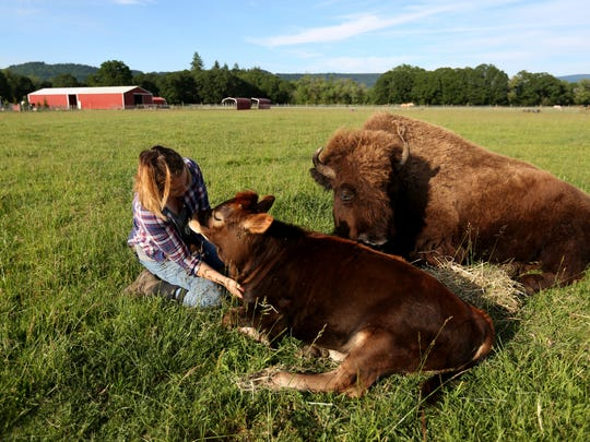 In this Friday, June 2, 2017 photo, Gwen Jakubisin, the executive director of Lighthouse Farm Sanctuary, snuggles with Oliver, a calf born in February, and Helen, a blind bison, in a field on the farm near Scio, Ore. Helen had never warmed up to other animals on the farm until she met Oliver.