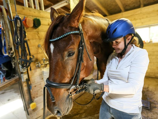 "Fernandel, a Dutch Warmblood that Owner Elizabeth Cope purchased from Holland is getting prepped for a ride at ""Willow Hill"" home and equestrian facility in Metamora, Mich. photographed on Tuesday July 25, 2017."