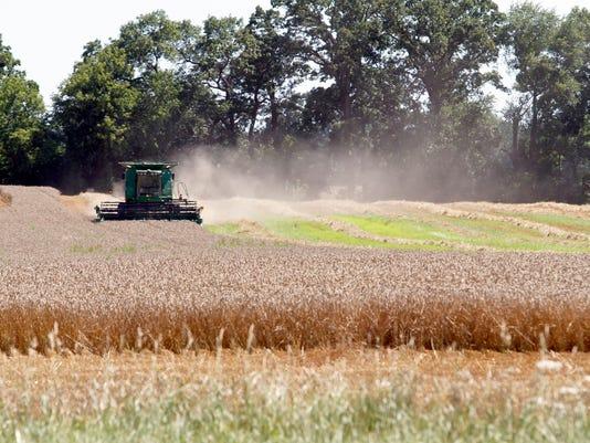 WSF 0804 standalone wheat field
