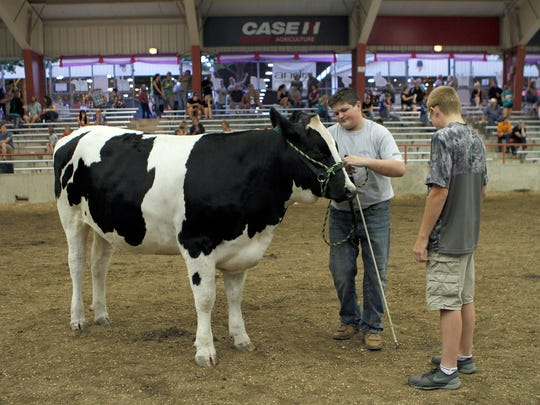 Coltin Coffeen, of Brown County, waits with his Champion Registered Dairy Steer at the Governor's Blue Ribbon Livestock Auction on Aug. 9 at the Wisconsin State Fair.
