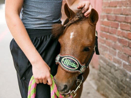 Jenessa Teachout with her four-year-old miniature horse Mocha at the Oregon State Fair on Sunday, Aug. 27, 2017, in Salem, Ore. Mocha made our list for top five cutest animals at the fair. Teachout has shown Mocha at the fair for three years, competing in reinsmanship, precision and in-hand trail.