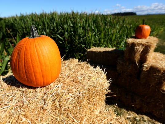 Hay bales and corn stalks are often sold as decorations at pumpkin farms.