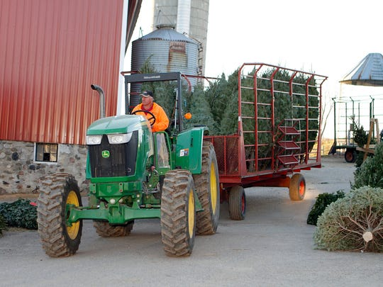 Tom Oberhaus, owner of Cozy Nook Farms, drives a load of Christmas trees to the tree lot for unloading on Nov. 24. Oberhaus expects to sell out of trees by early December.