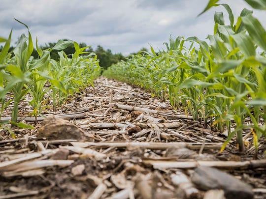 Shannon Nickolay, of Jerry Nickolay Farms Inc., has tried a reduced tillage method on his farm.