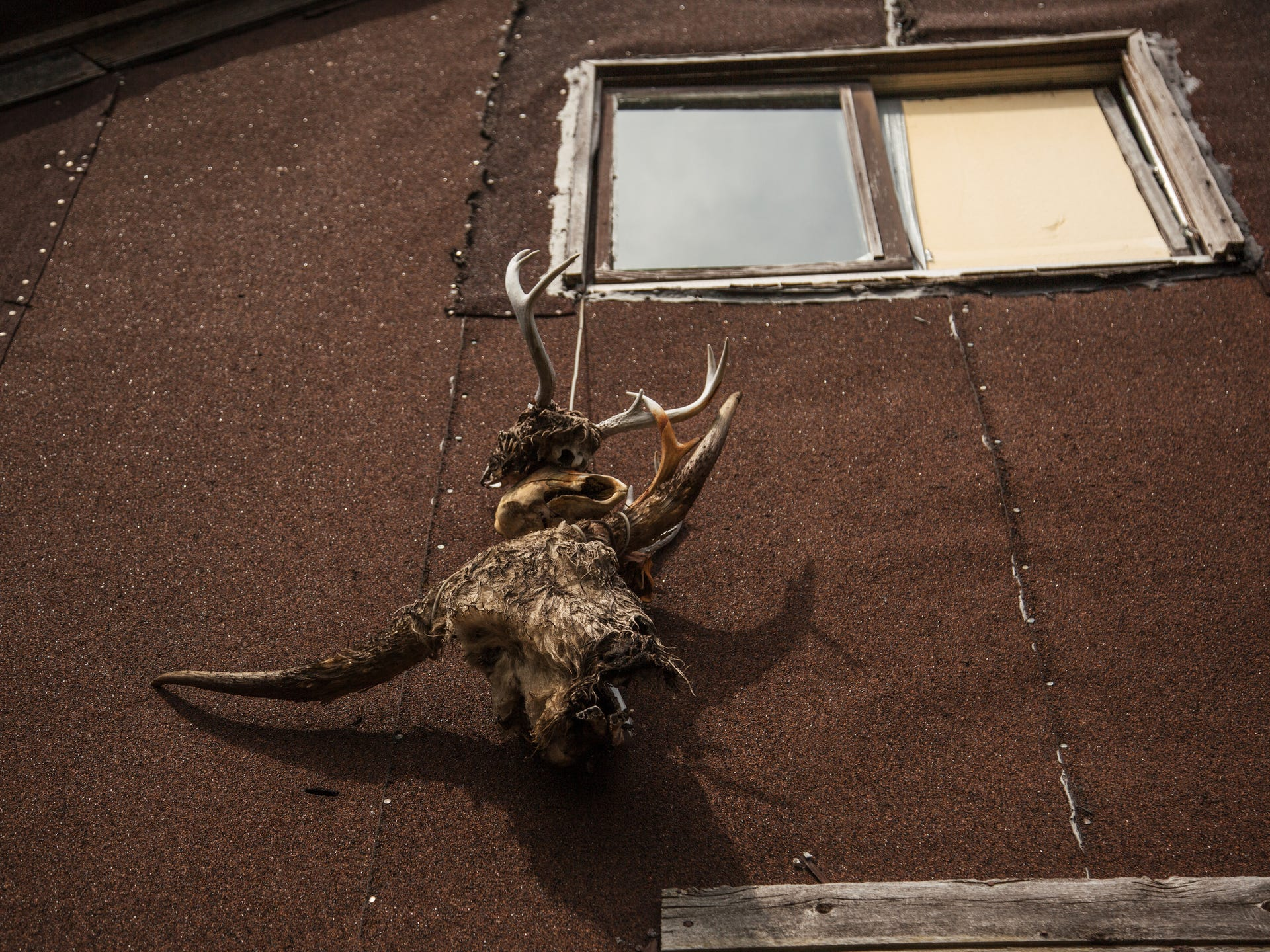 Decomposing animal skulls are seen hanging from a rope