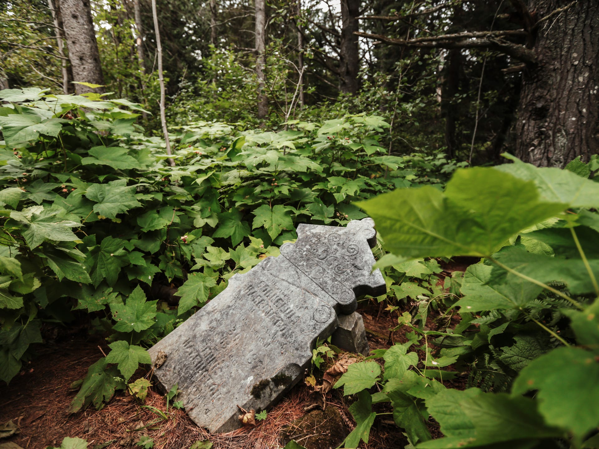 Tombstones poke out from the underbrush in a forest