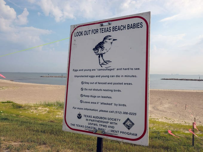 Signs posted during nesting season warn people not