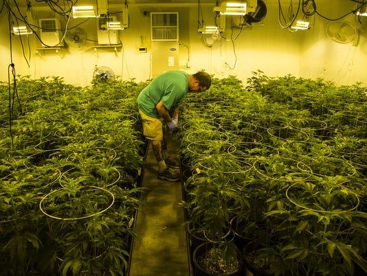 PNI medical marijuana growth
