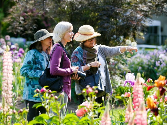 (Left to right) Jane Levy Campbell, Carol Putnam and Tina Lange look at the blooms at Schreiner's Iris Gardens on May 17, 2018, in Salem.