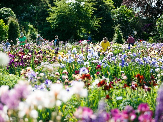 Visitors look at blooms in the 10-acre display gardens at Schreiner's Iris Gardens on Thursday, May 17, 2018, in Salem.