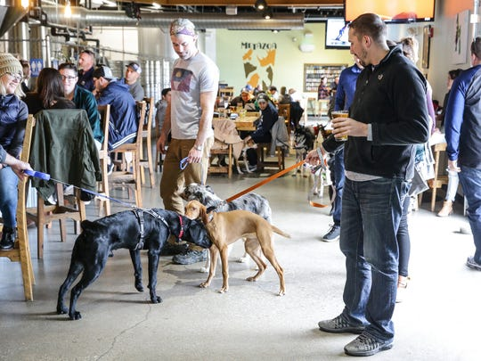 Dogs and their owners enjoy a day out at Metazoa Brewing