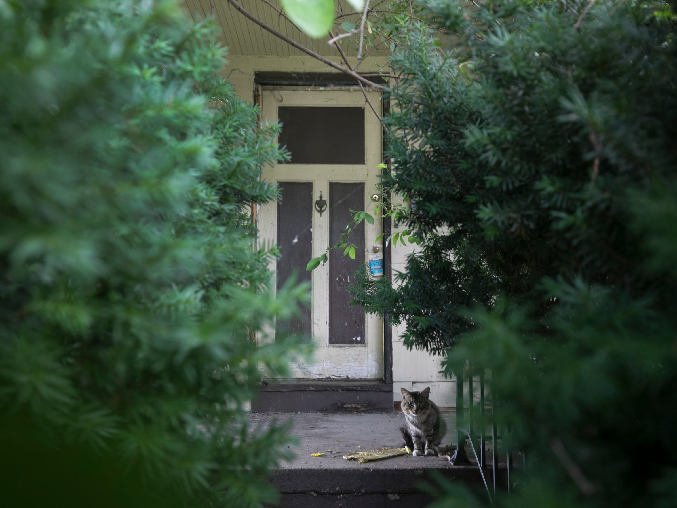 A stray cat sits on the porch of a blighted house on Santa Rosa Drive on Thursday. This house is part of the Fitzgerald project.