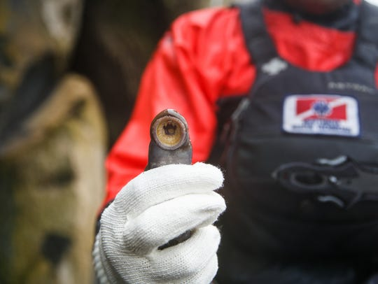 Brandon Weems holds a lamprey harvested from Willamette