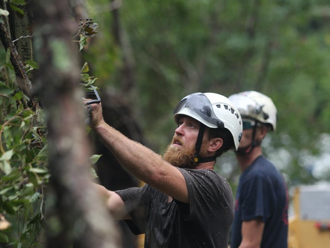All-American Tree Pro works to clear a tree along S.