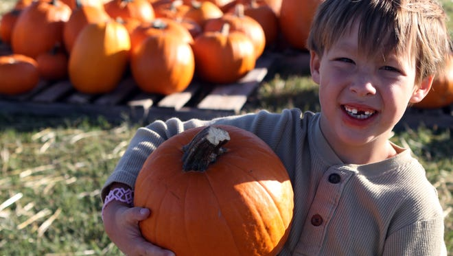 Beautiful Savior Lutheran Church has once again opened its Pumpkin Patch. Last year, Hunter McKee was able to find his perfect pick among thousands of pumpkins and gourds of all shapes and sizes.