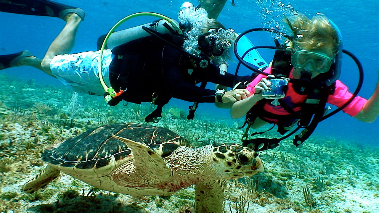The three Cayman Islands have an iconic marine environment, wonderful beaches and no taxes.
