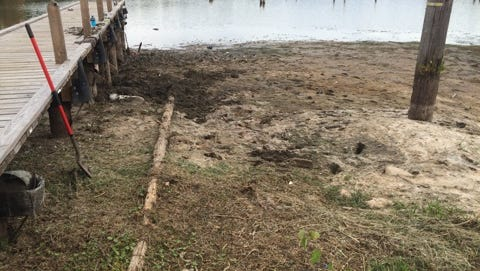 Bones found Friday afternoon at Cotile Lake belonged to animal, according to the Rapides Parish Sheriff's Office.