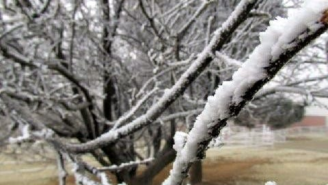 Tree branches were covered with chunks of ice.