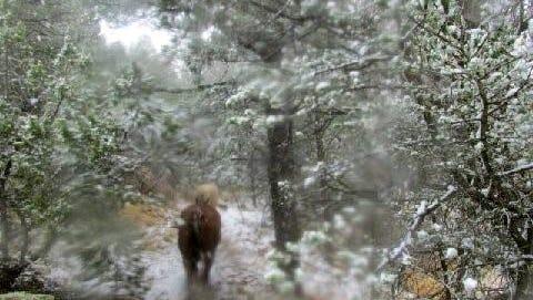 The camera lens of Matthew Midgett blurs a bit as snowfall intensifies on a ride in the mountains.