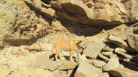 Lulu looks for some shade from an overhang on one wall of the arroyo.