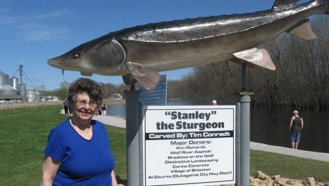 Carol Opgenorth-Baumgart of Sheboygan searching for Lake Sturgeon at a Shiocton Park along the Wolf River. Only three sturgeon were observed on Saturday, April 22, as the spawning run was over.