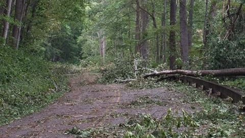 High winds that could down trees, as well as heavy rains, are expected in the mountains on April 12 and 13.