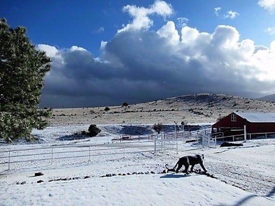 Mathew Midgett's ranch was coated in white Wednesday.