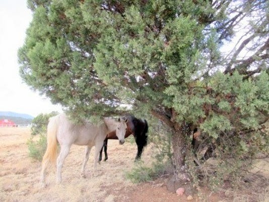 horses-under-tree.jpg