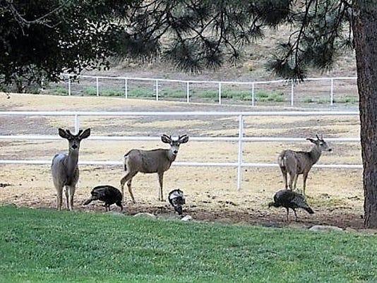 deer-and-turkey-mm.jpg