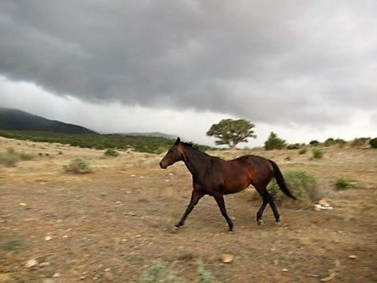 As a storm approaches, one of Matt Midgett's horses heads home to the barn.