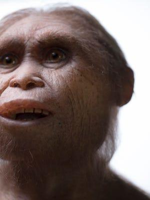 Reconstruction of Homo floresiensis by Atelier Elisabeth Daynes.