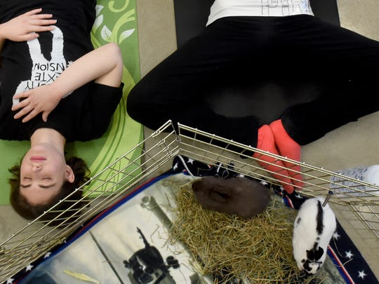 "Sam Phillips, left, takes in the quiet of the room during the ""Bunny Yoga"" class at the York County SPCA."
