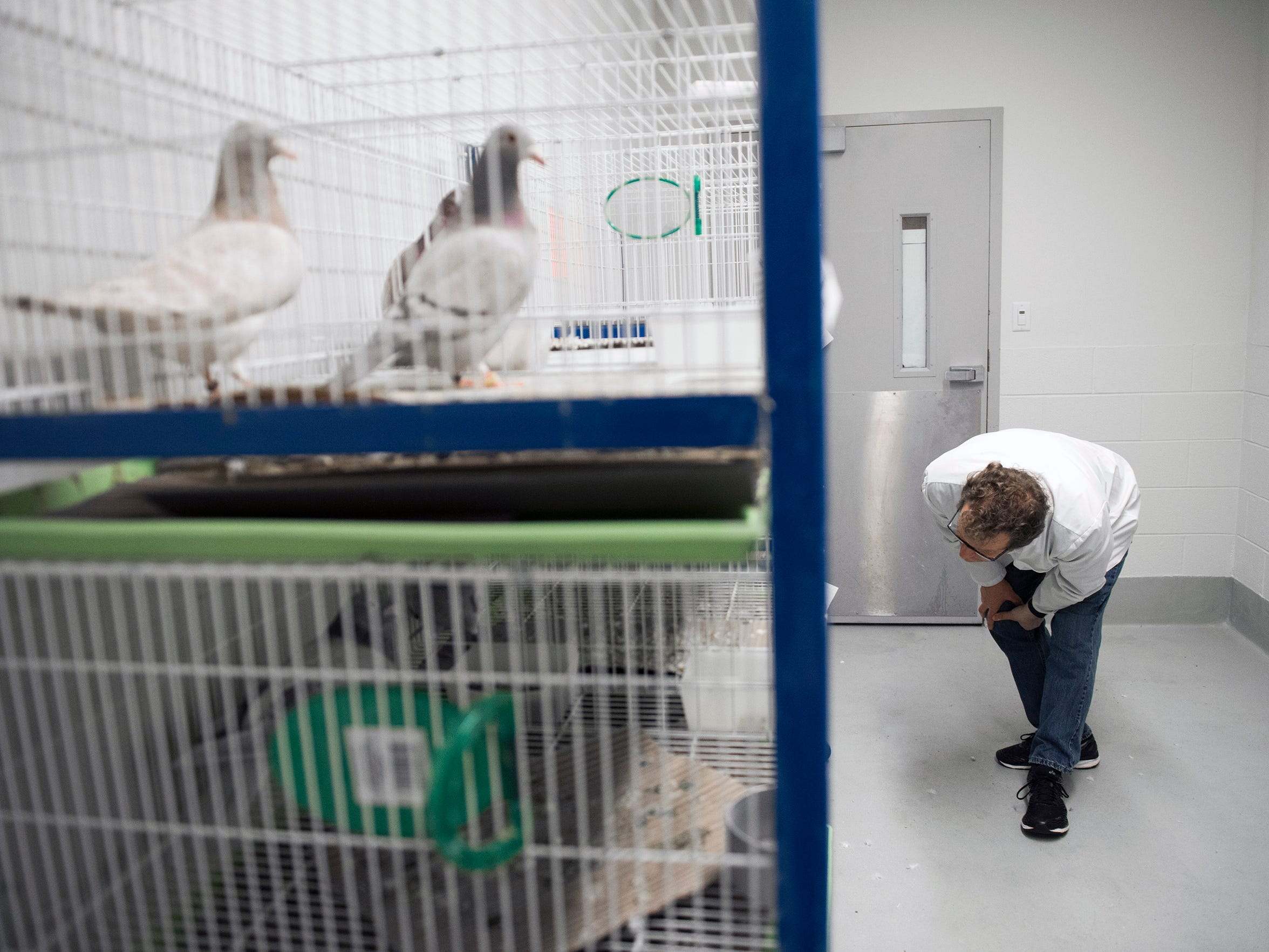 Dr. Gerald Hough checks on his pigeons Friday, April