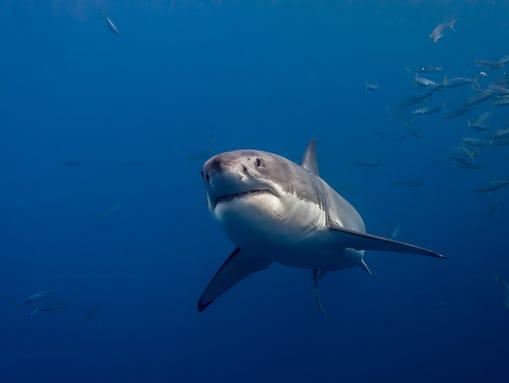 IMG_6795_George Probst_yourtake_ucg_shark3