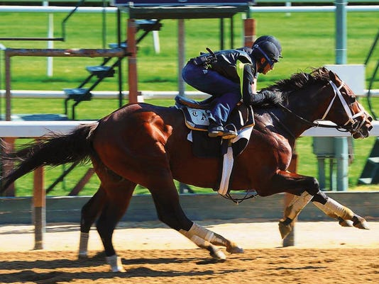 Materiality working out in New York training for the Belmont.