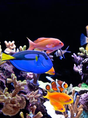 Courtesy of Aquaholics Aquarium Services