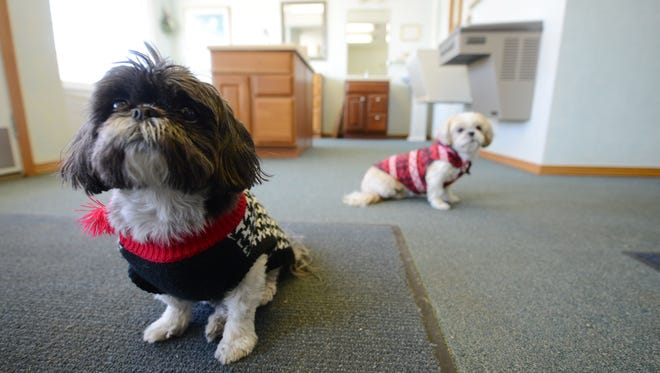 Shop dogs Suki, left, and Gabbie are among the more cuddly fixtures of the Garot Plumbing showroom on Velp Avenue.