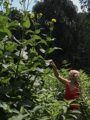 Maya van Rossum points out the sunflowers towering