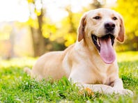 A dog park is proposed for Hales Corners Park.