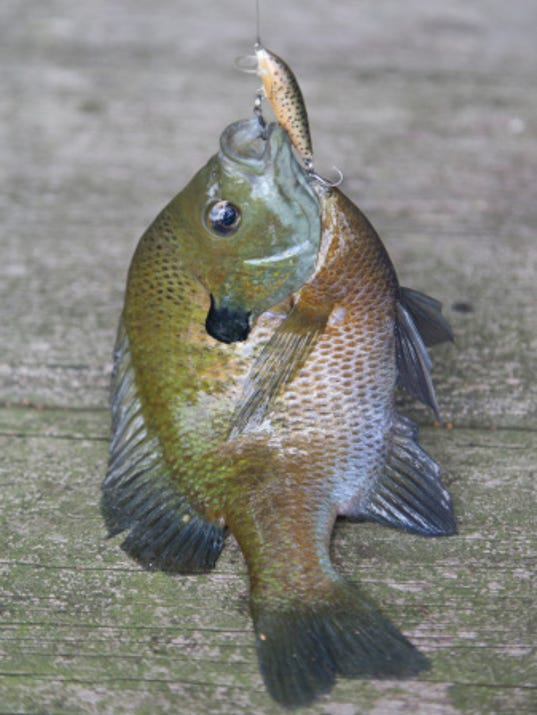 Dnr board approves statewide trout and panfish proposals for Dnr fishing regulations