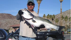 Striper bites have been good at Davis Dam and Lake Mohave.