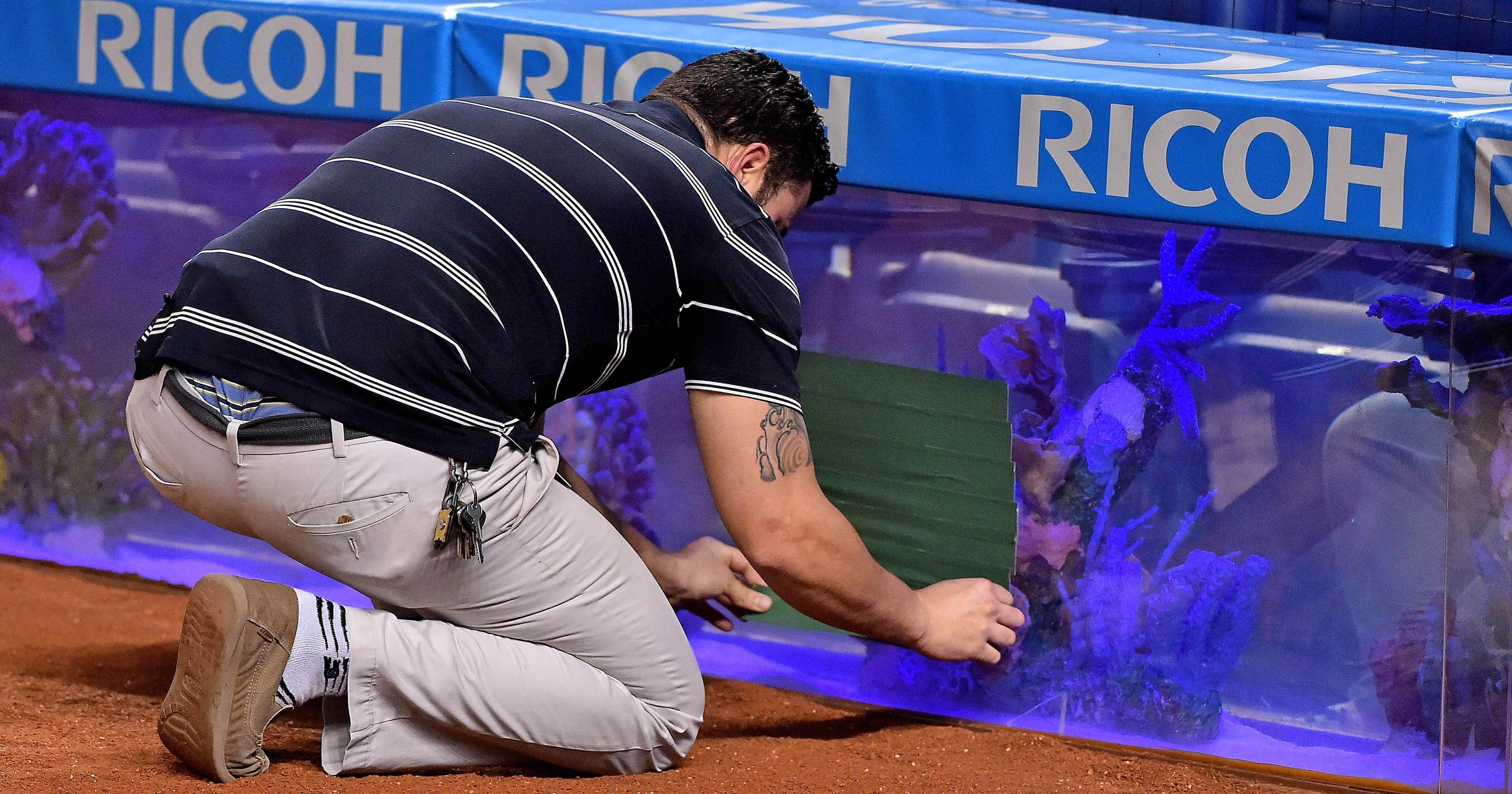 Foul ball cracked fish tank at Marlins Park