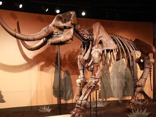 Fred the mastodon is part of the Ice Age Giants exhibit at the Indiana State Museum.