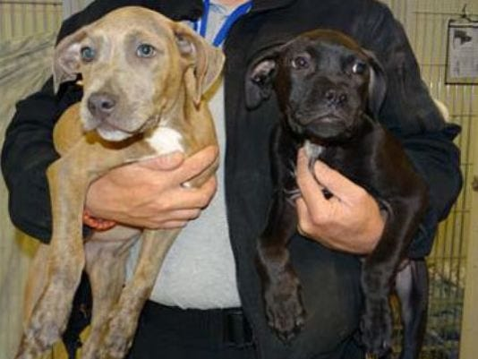 1400092074000-puppies-rescued