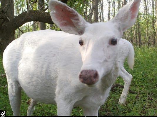 636348711262683477-Ghost-Deer-Tours-True.jpg