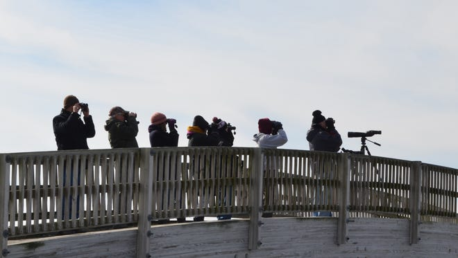 Birders line the bridge at Turkey Point in Dividing Creek to watch eagles fly over the tree line during last year's Cumberland County Winter Eagle Festival. This year's festival starts with a trail walk at 7 a.m. Feb. 3.